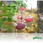 Как сушить плоды ягоды овощи.