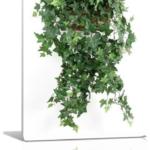 Топ 5 комнатных растений, влияющих на отношения