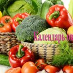 Календарь овощевода